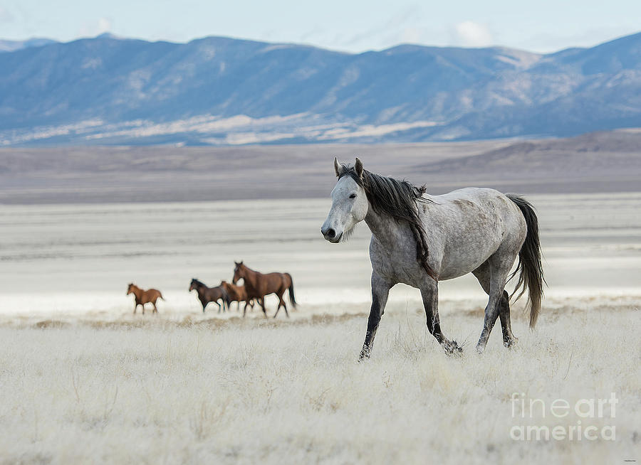 Nikon Photograph - I Better Hurry  by Nicole Markmann Nelson