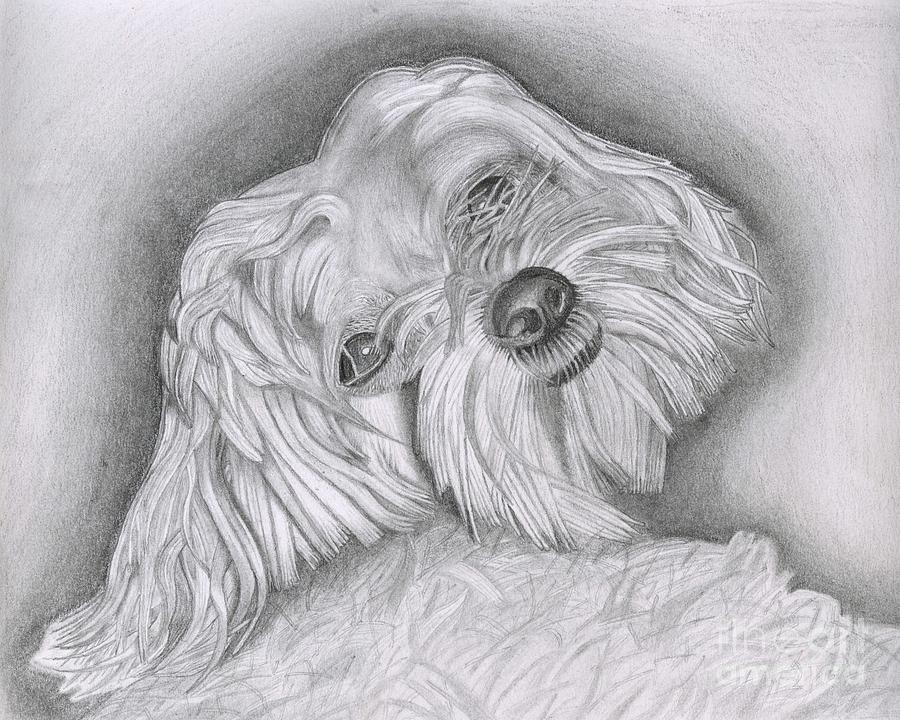 Animal Drawing - I Did Not Hear You Coming by Robert Wilson