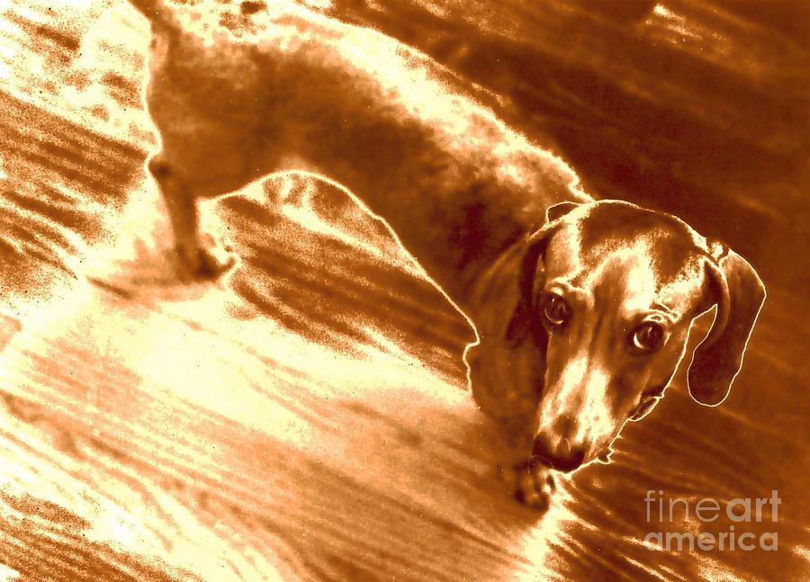 Dogs Photograph - I Did Not Mean To Do It by Elizabeth Hoskinson