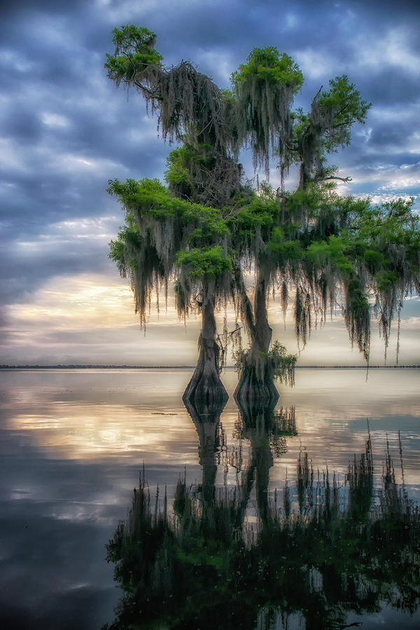 I Dreamed of Cypress by Ghostwinds Photography