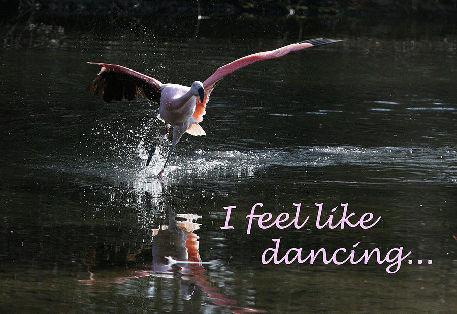 Flamingo Photograph - I Feel Like Dancing by Karol Livote