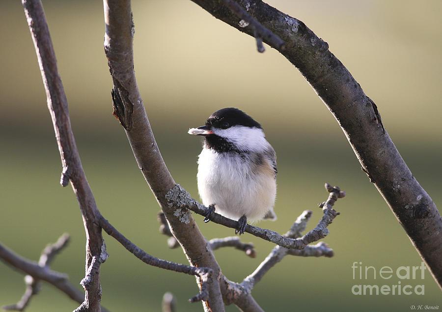 Bird Photograph - I Finally Got It by Deborah Benoit