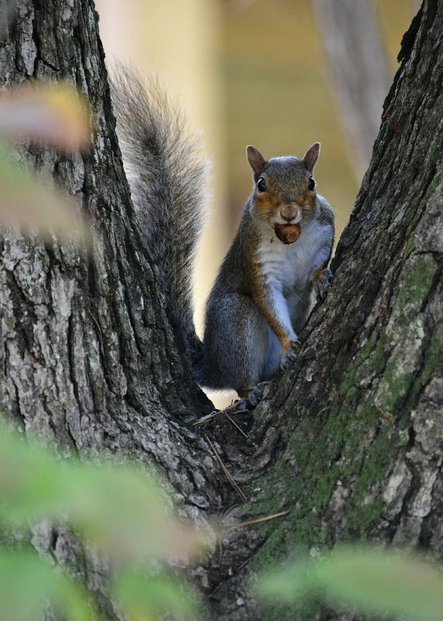Squirrel Photograph - I Found It - Its Mine by rd Erickson