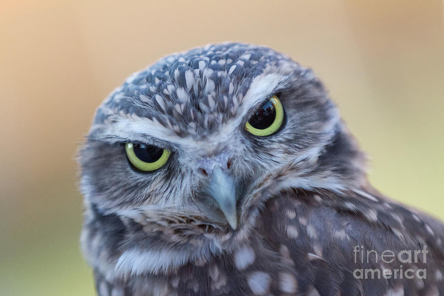 I Give A Hoot by Chris Scroggins