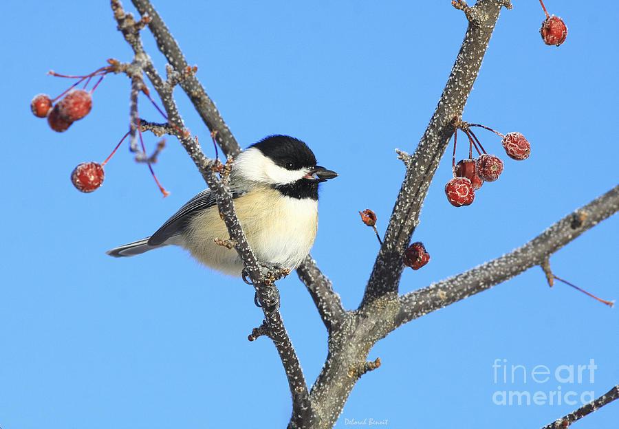 Bird Photograph - I Got My Seed by Deborah Benoit