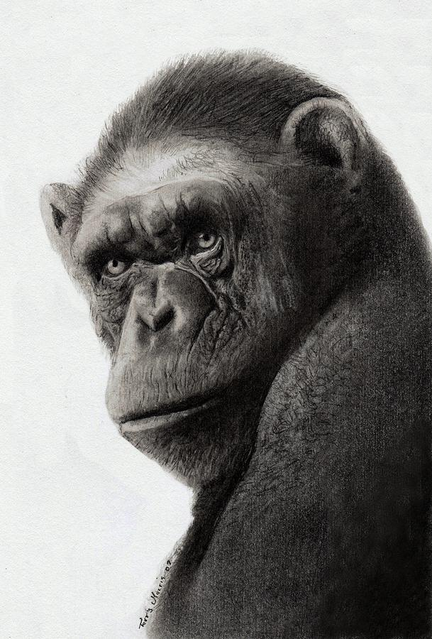 Monkey Drawing - I Got The Blues by Terry Morris