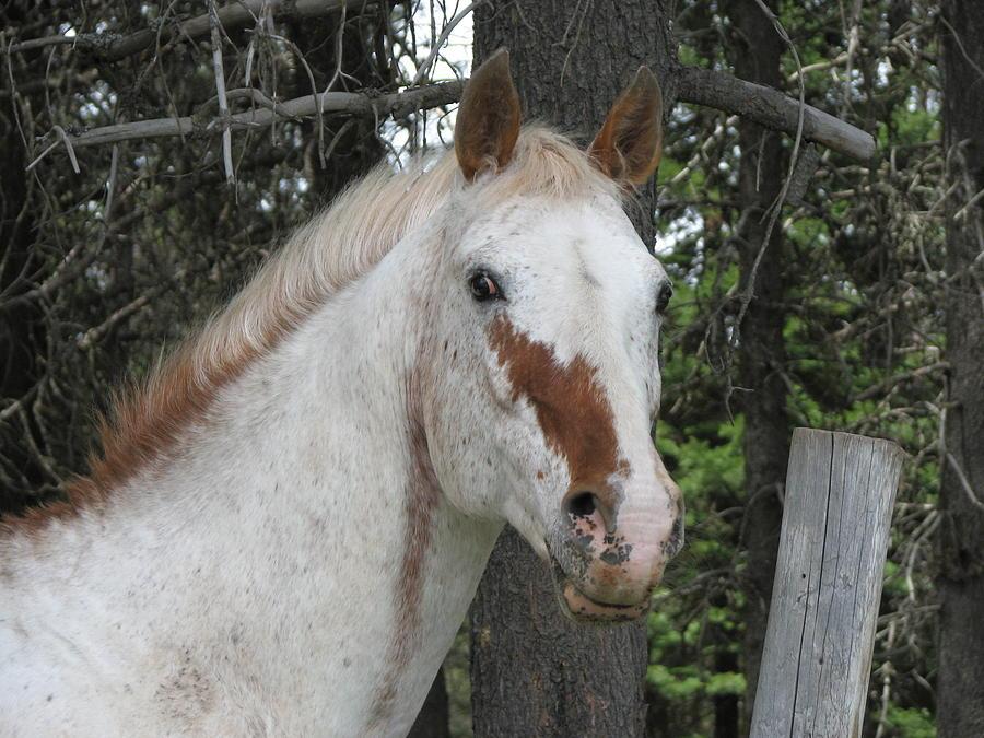 Horse Photograph - I Hear You by Athena Ellis