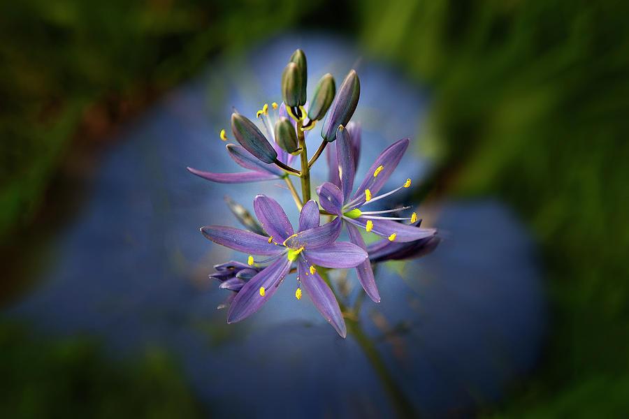 Flowers Digital Art - I Heart Camas by John Christopher