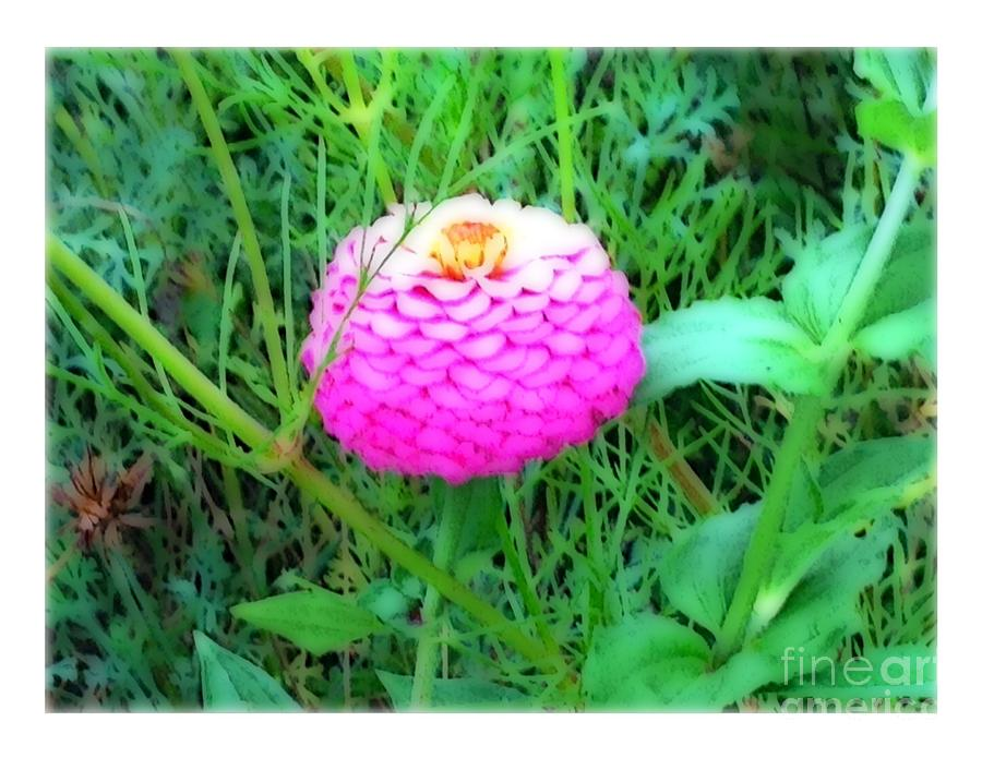 Pink Photograph - I Hope To See A Zinna by Debra Lynch