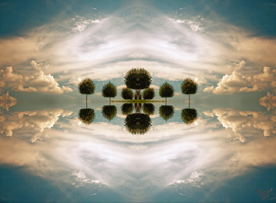 Tree Photograph - I Imagine The Paradise by Renata Vogl
