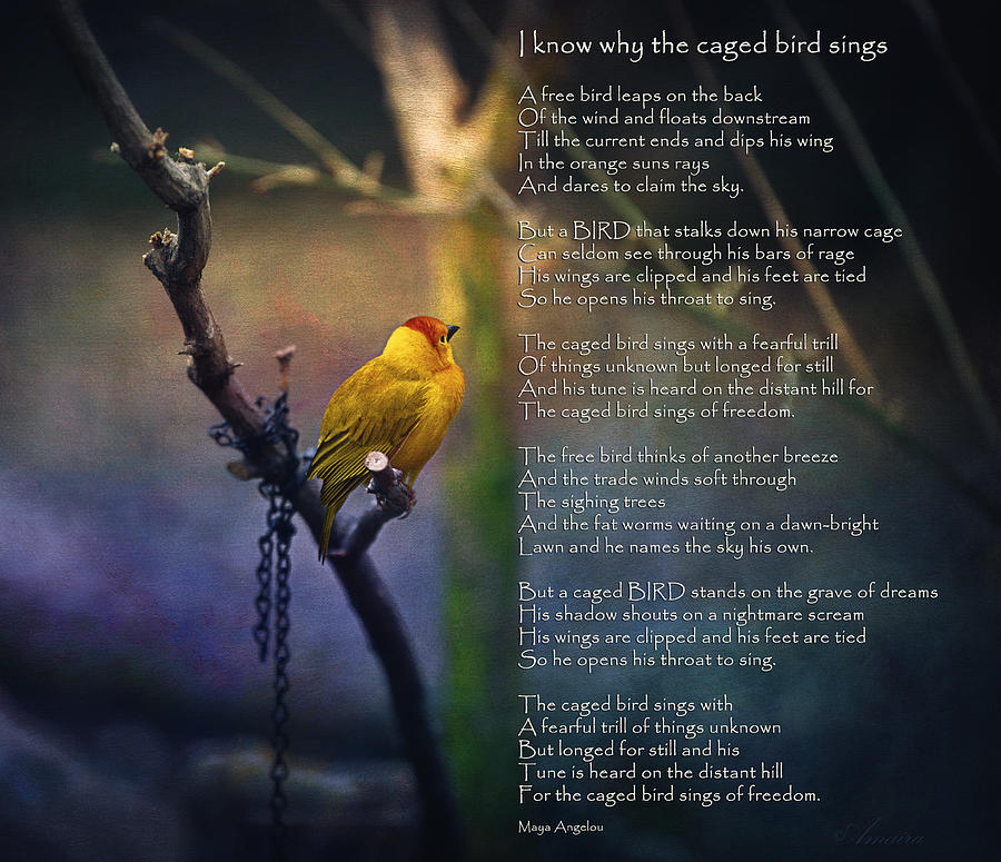 Poem Photograph - I Know Why The Caged Bird Sings By Maya Angelou by Maria Angelica Maira
