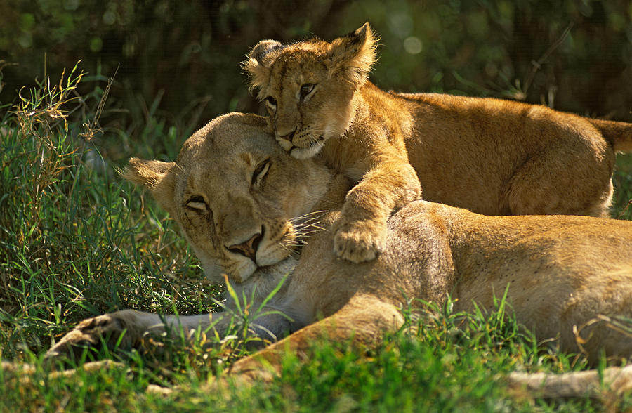 Africa Photograph - I Love My Mother by Johan Elzenga