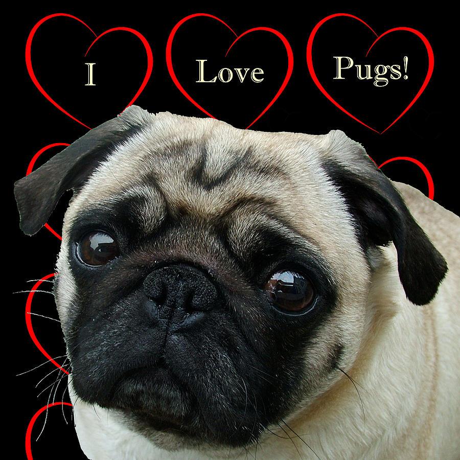 Pug Mixed Media - I Love Pugs with Hearts by Patricia Barmatz