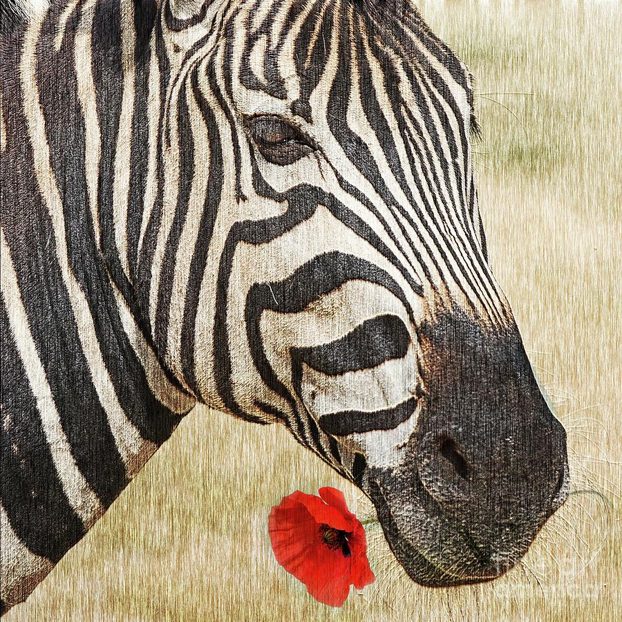 Zebra Photograph - I Love Red by Barbara Dudzinska