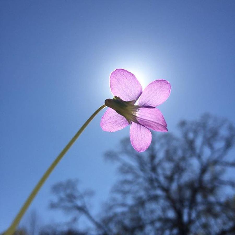 Blue Photograph - Native Flower by Gabrielle Coleman