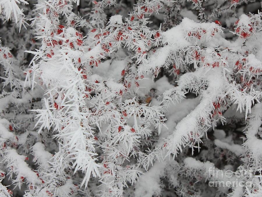 Heart Photograph - I Love Winter by Carol Groenen