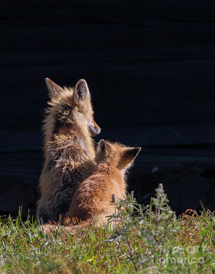 Fox Photograph - I Love You by Rod Giffels