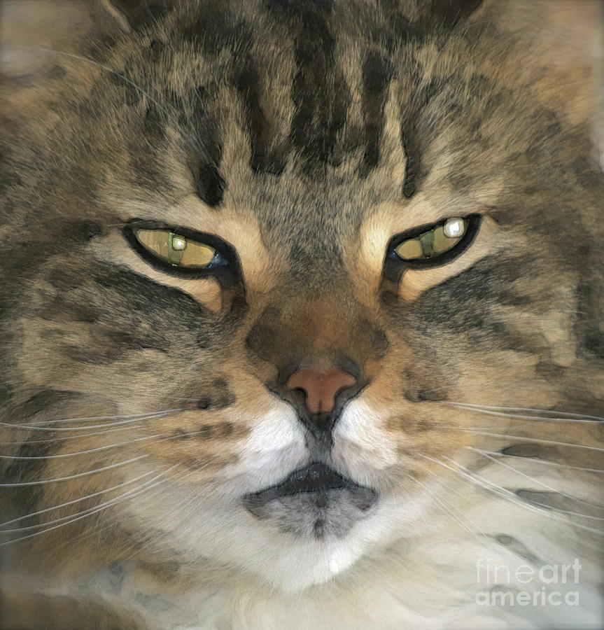 Cat Photograph - I Miss Him Sometimes ... by Gwyn Newcombe