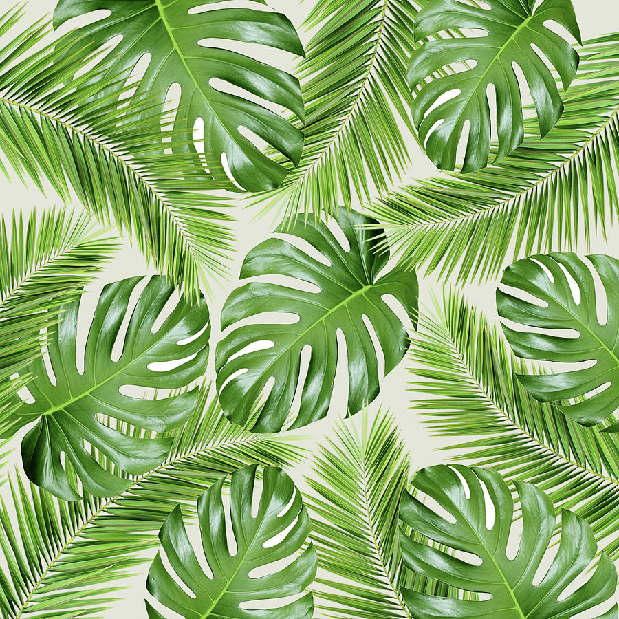 I Need A Tropical Vacation Print Photograph
