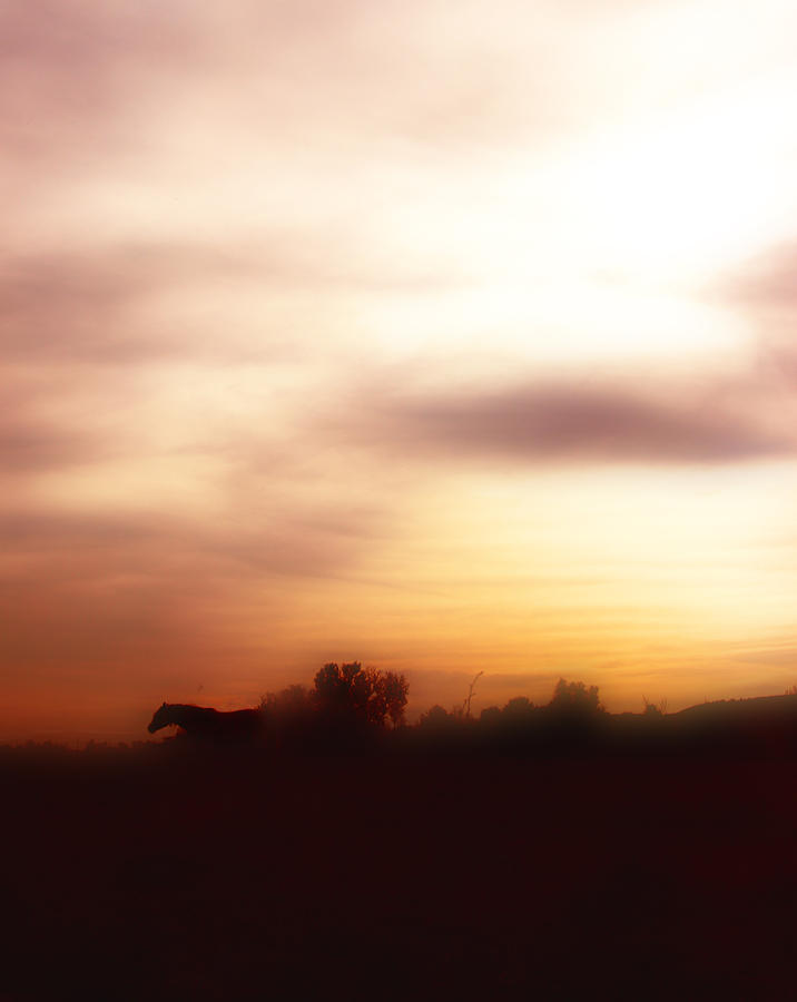 Horse Photograph - I Once Had A Dream ... by ELA-EquusArt