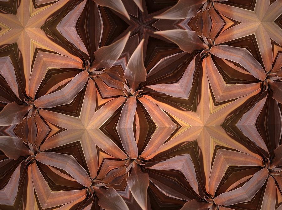 Nature Photograph - I See Stars by Sylvan Adams