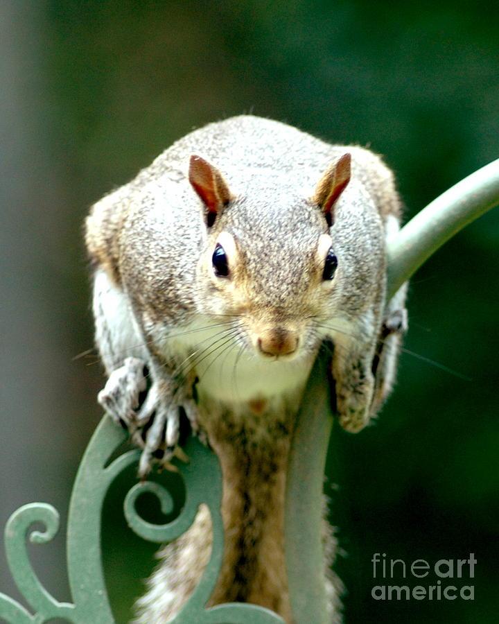 Squirrel Photograph - I See You by Lynn Reid