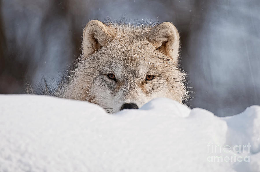 Wildlife Photography Photograph - I See You by Michael Cummings