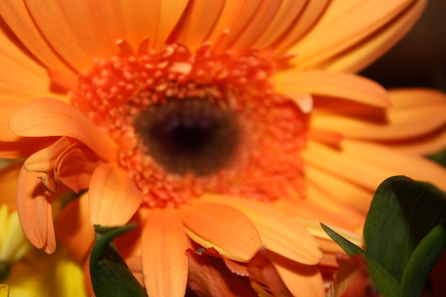 Flower Photograph - I See You by Monica Smith