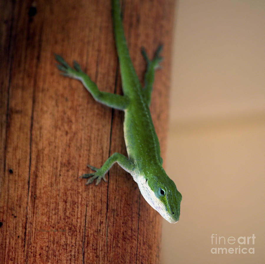 Amphibian Photograph - I See You Too by Patricia Griffin Brett