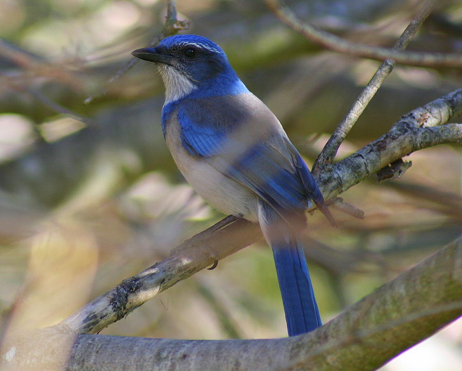 Blue Bird Photograph - I Think I Found The Blue Bird Of Happiness by Kerry Reed