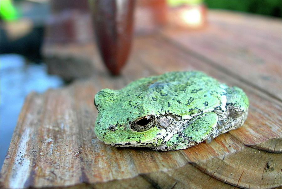 Amphibians Photograph - I Toad You So by Randy Rosenberger