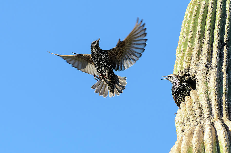 Bird Photograph - I Was Hoping Youd Drop By by Emily Bristor