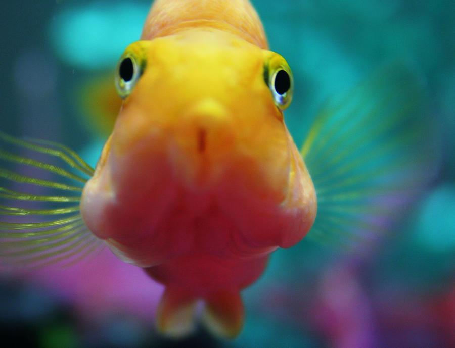Fish Photograph - I Wish I Could Fly by Kim Ripley