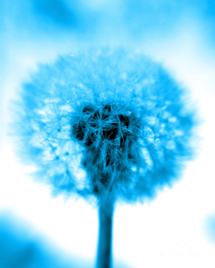 Blue Photograph - I Wish In Turquoise by Valerie Fuqua