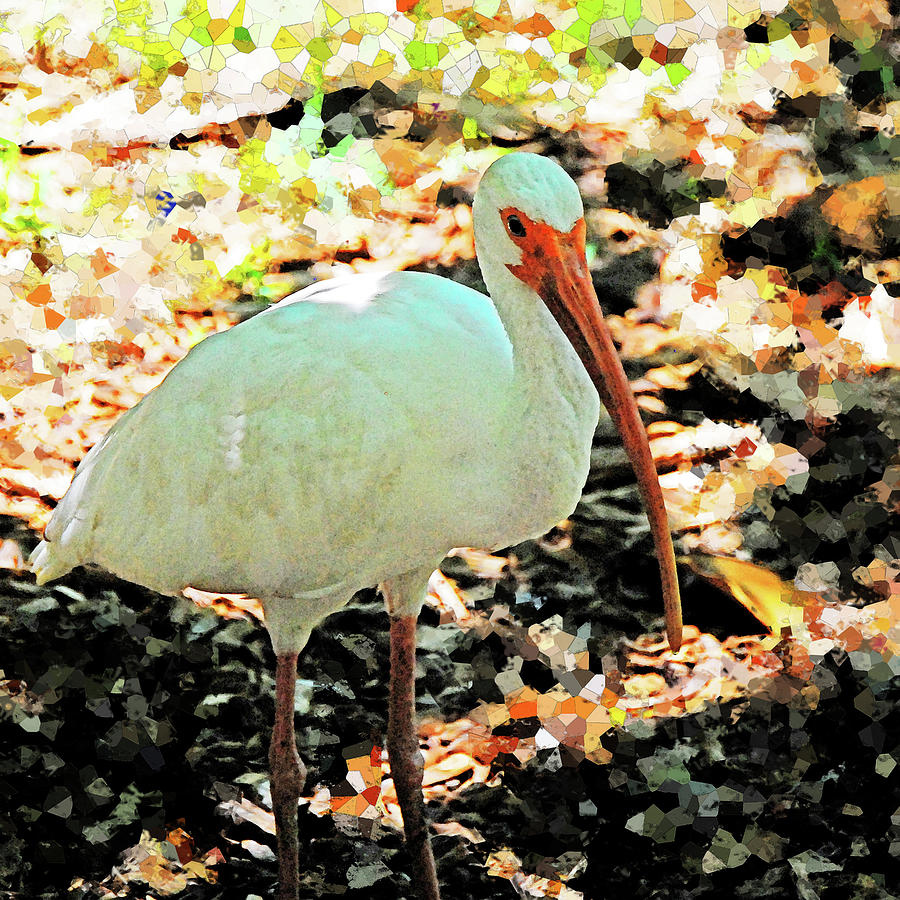 Ibis by Simone Hester