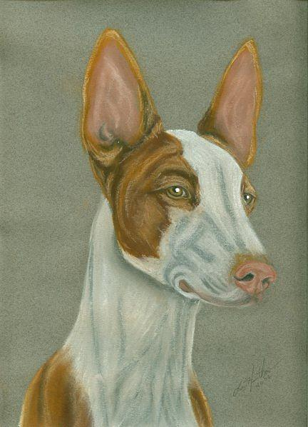 Ibizan Hound Painting - Ibizan Hound by Linda Henthorn