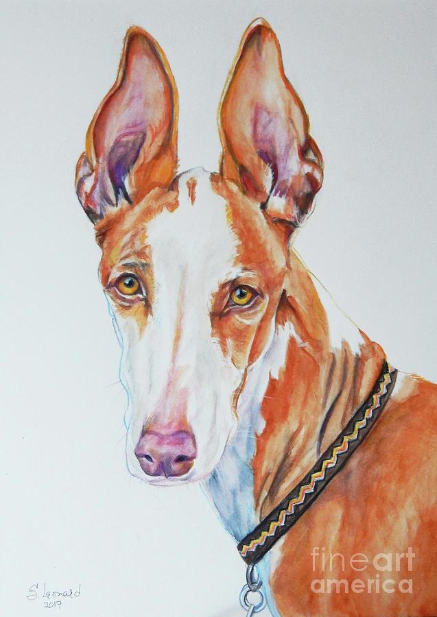 Dog Painting - Ibizan Hound by Suzanne Leonard