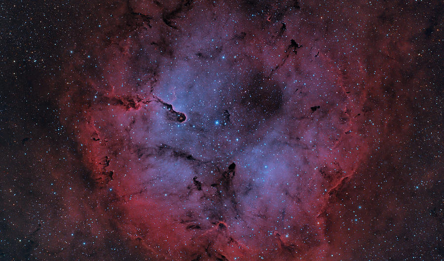 Astronomy Photograph - Ic 1396 by Brian Peterson