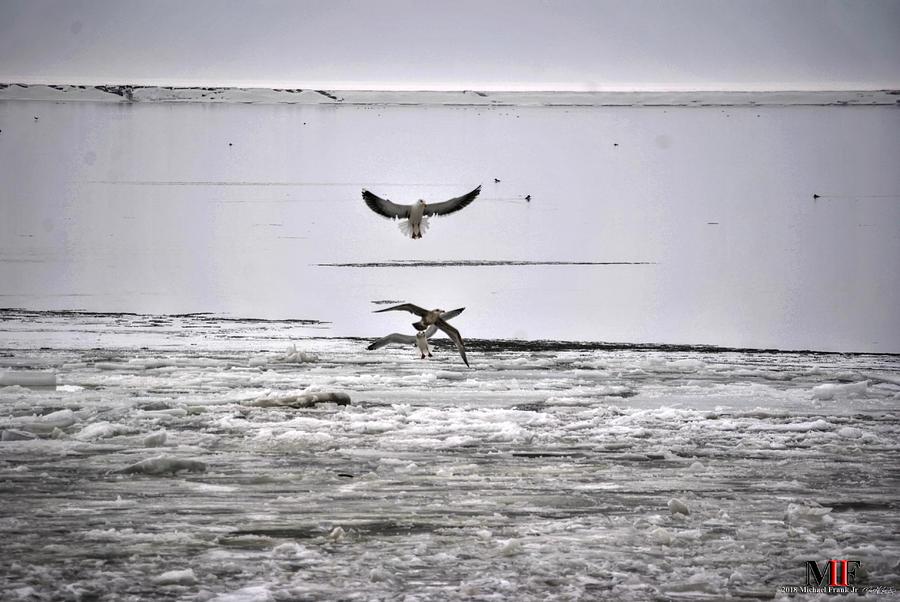 Ice Fishing Gulls Photograph