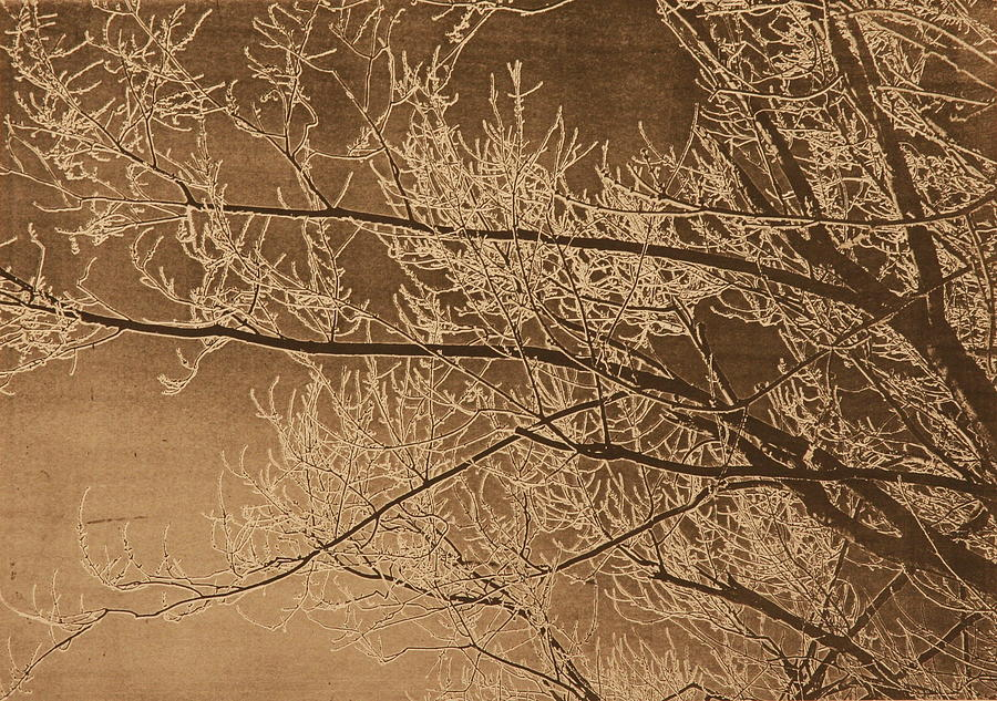 Branches Painting - Ice Storm Branches - Black by Michelle Miron-Rebbe