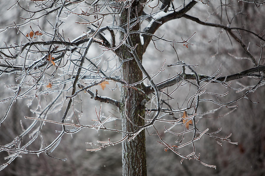 Nature Photograph - Ice Tree by Jane Melgaard