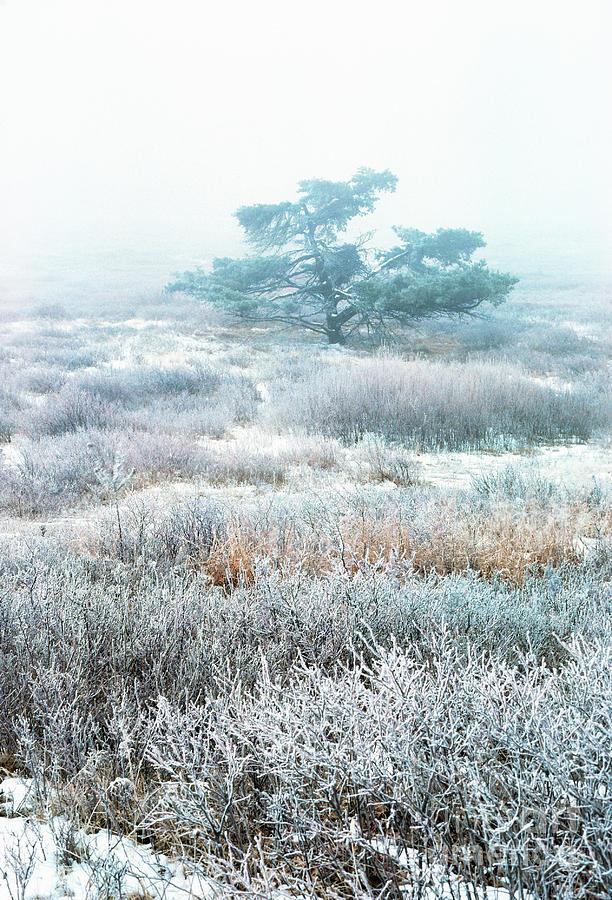Virginia Photograph - Ice Tree Shenandoah National Park by Thomas R Fletcher