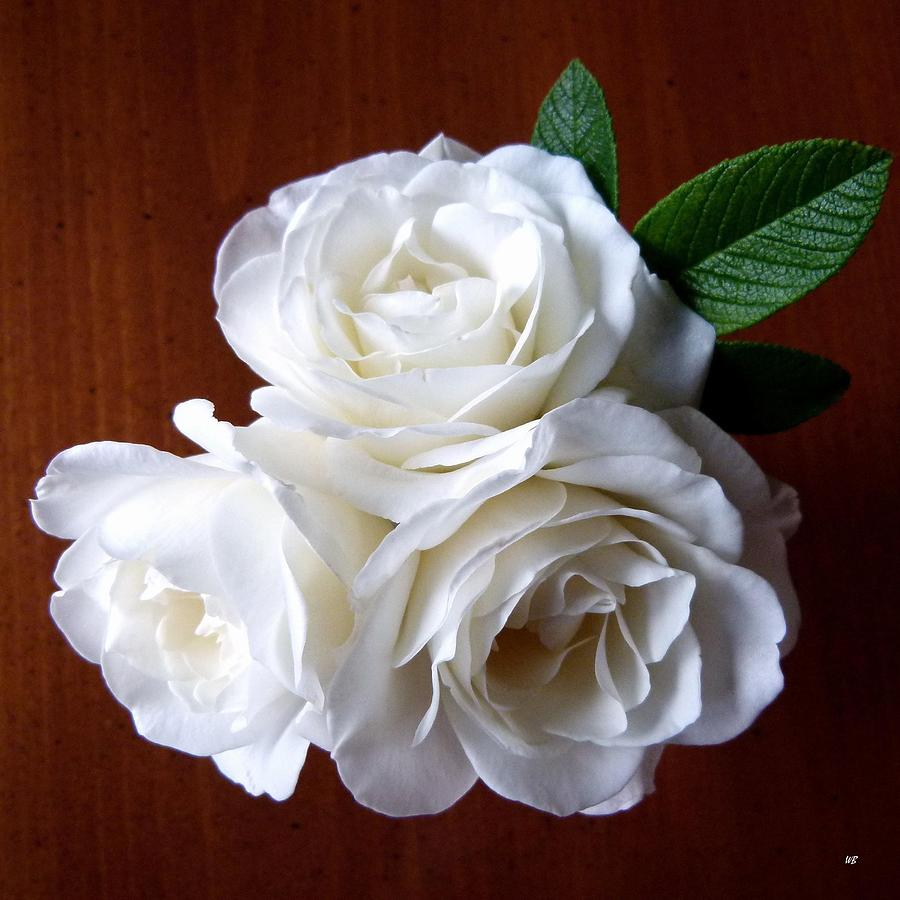 White Roses Photograph - Iceberg Rose Trio by Will Borden