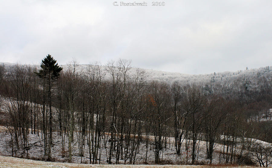 Trees Photograph - Iced Tree Line by Carolyn Postelwait