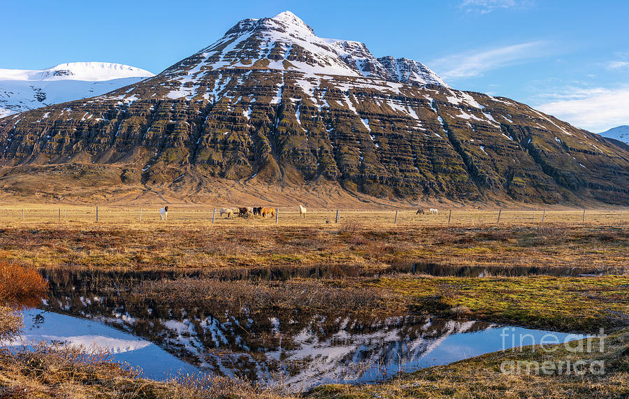 Iceland Photograph - Iceland Ring Road Horse Pastures by Mike Reid