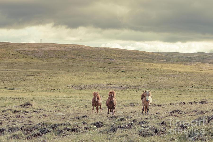 Iceland Photograph - Icelandic Horses by Edward Fielding