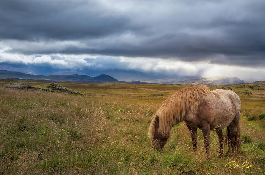 Icelandic Pastoral with Iconic Horse by Rikk Flohr