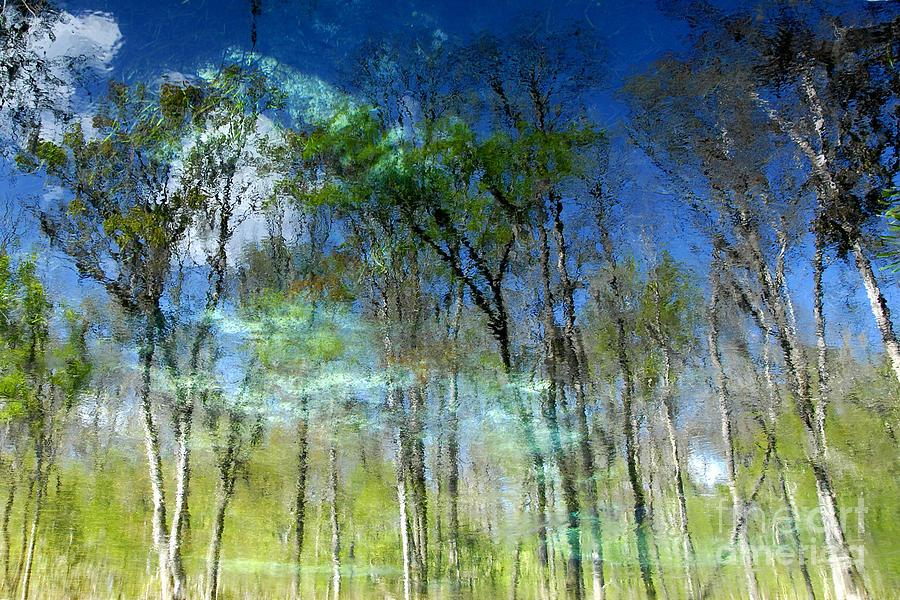 River Photograph - Ichetucknee Reflections by David Lee Thompson