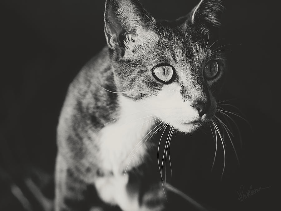 Grey Cat Photograph - Ickis The Cat by Kharisma Sommers