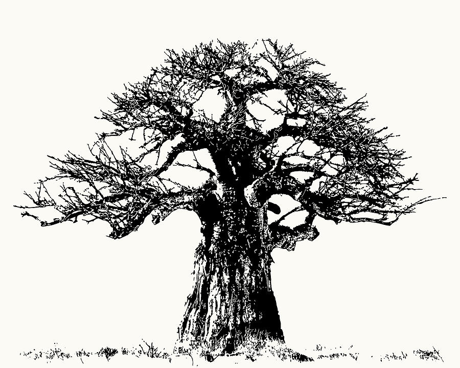 Iconic Baobab Tree in Black and White by Scotch Macaskill